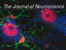 Journal of Neuroscience features article co-authored by Dr. Gordon Mitchell