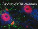 JournalNeuroscience_Mitchell_2015