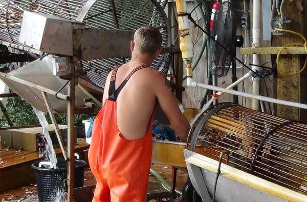 Clam worker in Cedar Key